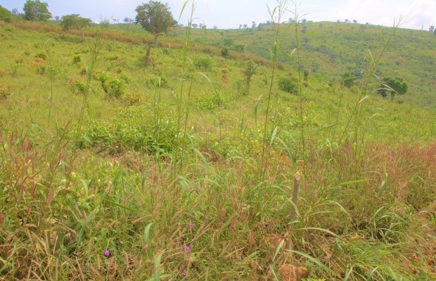 Photo #1 Empty Land for sale in Sierra Leone, Freetown, CHARLOTTE